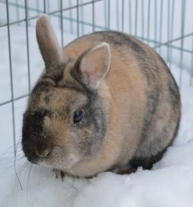 Kaninchen am Welttierschutztag