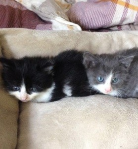 Katzen am Welttierschutztag