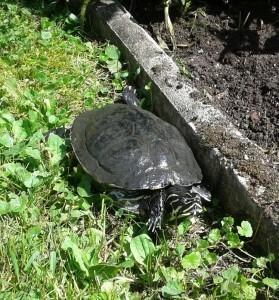 Schildkröte am Welttierschutztag