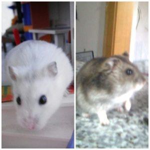 Mäuse am Welttierschutzttag