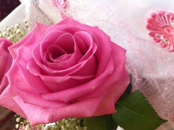 Rose zu Muttertag